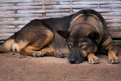 Le chien de sommeil s'est trouvé sur le sable image libre de droits