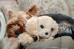Le chien dort avec un jouet de peluche photo stock