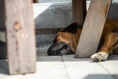 Le chien dort confortablement sous la table images stock