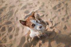 Le chien drôle se repose sur le sable sur la plage été et voyage Photographie stock