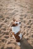 Le chien drôle se repose sur le sable sur la plage été et voyage Photo libre de droits