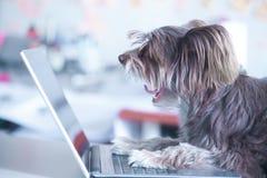 Le chien drôle travaille à l'ordinateur portable Animal familier utilisant l'ordinateur Photos libres de droits