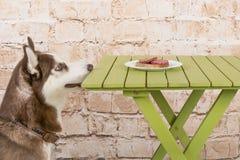 Le chien du ` s de cosse vole un morceau de saucisse de la table dans le secret des propriétaires Photographie stock
