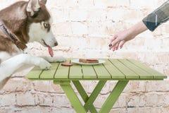 Le chien du ` s de cosse vole un morceau de saucisse de la table dans le secret des propriétaires Image stock
