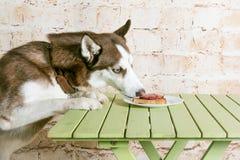 Le chien du ` s de cosse vole un morceau de saucisse de la table dans le secret des propriétaires Photos libres de droits