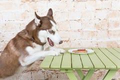 Le chien du ` s de cosse vole un morceau de saucisse de la table dans le secret des propriétaires Images stock