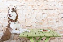 Le chien du ` s de cosse vole un morceau de saucisse de la table dans le secret des propriétaires photos stock