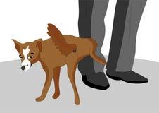 Le chien effronté et désobéissant a décidé de faire pipi sur le pied du propriétaire, elle va voir narquois Image libre de droits