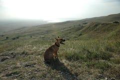 Le chien est dans le domaine Chiot adorable Un chien masculin en parc images libres de droits