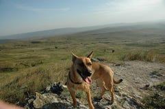 Le chien est dans le domaine Chiot adorable Un chien masculin en parc photographie stock libre de droits