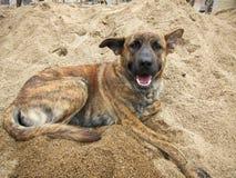 Le chien est heureux sur le sable Photographie stock