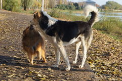 Le chien est le man& x27 ; meilleur ami de s, dans l'herbe d'automne Image libre de droits