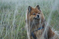Le chien est le man& x27 ; meilleur ami de s, dans l'herbe d'automne Photos stock