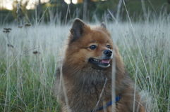 Le chien est le man& x27 ; meilleur ami de s, dans l'herbe d'automne Images libres de droits