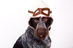 Le chien est pilote Images libres de droits