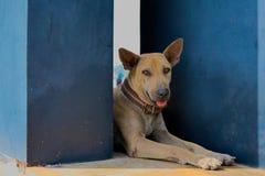 Le chien est repos dans un coin qui s'adaptent photos stock