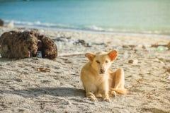 Le chien est sur la plage Photos libres de droits