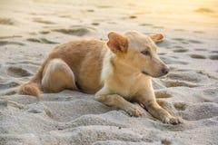Le chien est sur la plage Image stock