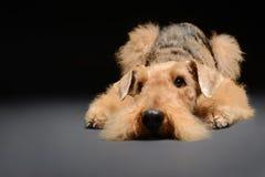 Le chien est votre meilleur ami Photographie stock libre de droits