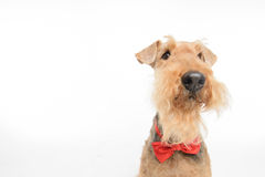 Le chien est votre meilleur ami Image libre de droits