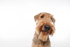 Le chien est votre meilleur ami Images stock
