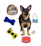 Le chien et c'est des accessoires Photographie stock libre de droits