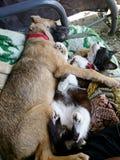 Le chien et le chat détendent ensemble photographie stock libre de droits