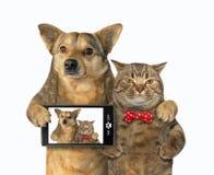 Le chien et le chat ont fait le selfie photo stock