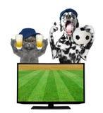 Le chien et le chat avec la boule et la bière éventent le championnat du football photographie stock libre de droits