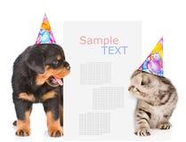 Le chien et le chat dans des chapeaux d'anniversaire jette un coup d'oeil par derrière le panneau d'affichage Images stock