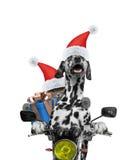 Le chien et le chat de Santa avec le cadeau montent sur une moto Photos libres de droits