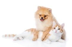 Le chien et le chat de Spitz se trouvent ensemble Photos libres de droits