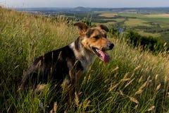 Le chien examine la distance de la montagne Photos libres de droits