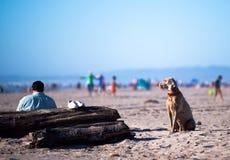 Le chien fidèle Labrador de passionné se repose sur la garde côtière de sable Photographie stock