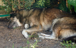 Le chien fixent sous l'arbre photo libre de droits