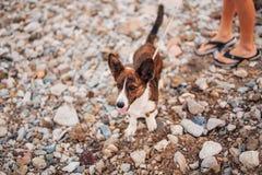 Le chien fonctionne et folâtre sur la plage Photo libre de droits