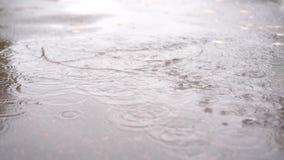Le chien fonctionne par un magma en automne pendant la pluie dans le mouvement lent clips vidéos