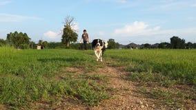 Le chien fonctionne sur l'herbe verte Photo stock