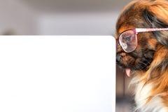 Le chien futé Photographie stock libre de droits