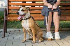 Le chien gai et aimable se repose à côté de son propriétaire au parc dans la ville Image stock