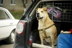 Le chien garde la machine Photographie stock libre de droits