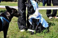 Le chien heureux Photos libres de droits