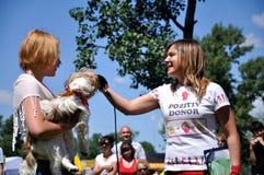 Le chien heureux Photo stock