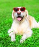 Le chien heureux de golden retriever de portrait dans des lunettes de soleil se trouve l'été d'herbe Photos libres de droits
