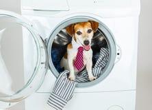 Le chien heureux de sourire offrent d'employer notre service d'animal familier de blanchisserie et de nettoyage à sec photographie stock libre de droits