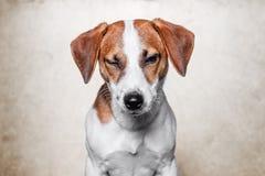 Le chien heureux pose Images stock