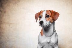 Le chien heureux pose Images libres de droits