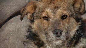 Le chien hirsute abandonné se repose sur la rue Image libre de droits