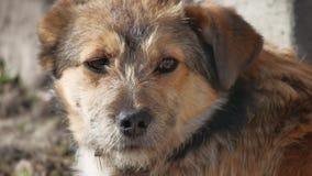Le chien hirsute abandonné se repose sur la rue extérieure Photographie stock