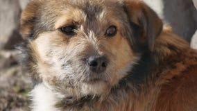 Le chien hirsute abandonné se repose sur la rue extérieure Photos stock
